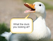white duck_angry